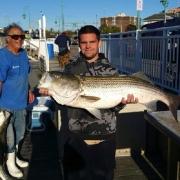 Fisherman120 Nice Striper