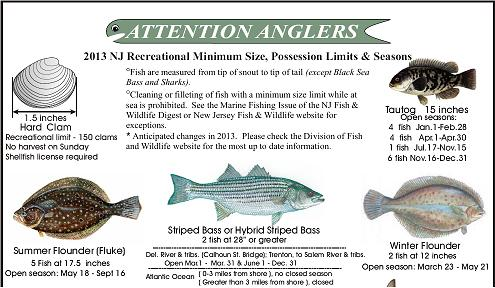 Saltwater fish limits saltwater fish bag size limits for Fishing stores nj
