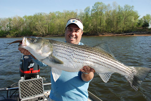 delaware river stripers nj saltwater fisherman your 1