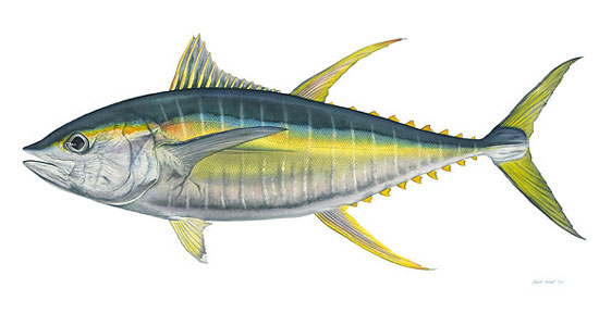 yellowfin_tuna.jpg